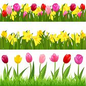 3 Flower Borders From Tulips And Narcissuses, Isolated On White Background, Vector Illustration