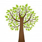Baum mit grünen Leafage, isoliert auf weißem Hintergrund
