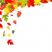 Falling Leaves, Isolated On White Background