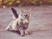 Cute Cat, Funny Cat, Funny March S Cat, Cat Outside Home poster
