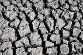 black and white image of shrinkage cracks