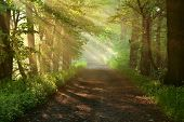 Beautiful morning in forest - road of forest