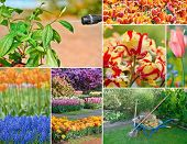 Colorful collage of flowers and garden