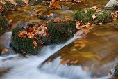 Detail of small water stream in autumn forest