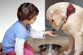 Cute child feeding his pet dog
