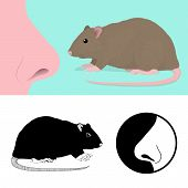Idiom To Smell A Rat