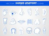 Human anatomy website icons set. EPS 10.