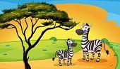 illustration of two zebra under the tree