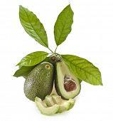 Frutas aguacates con hojas jóvenes de árbol de aguacate, aislado en blanco