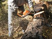 foto of cutting trees  - A logger cutting a tree into firewood rounds - JPG