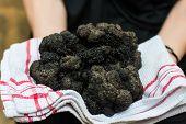 woman holding biggest black truffle dordogne perigord France