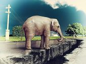 elephant on the cracked road  concept ( photo and hand-drawing elements combined).
