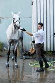 stock photo of wet pants  - Jockey hold horse on leash on hippodrome - JPG