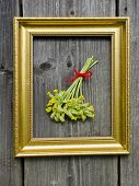 picture of cowslip  - spring medical herbs cowslip bunch on wall in picture frame - JPG