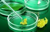 Chemical research in Petri dishes on dark green background