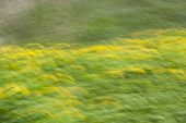 Slow Shutter Speed On Green Grass And Dandelions