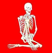 Bone 262