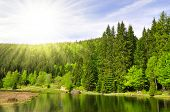 Small Arber Lake in National Park Bavarian Forest - Germany