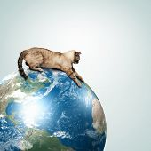 picture of racy  - Image of siamese cat playing with globe - JPG