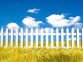 Fresh Yellow Grass On Blue Sunny Sky Background poster