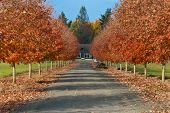 Driveway Lined With Fall Color