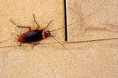 image of cockroach  - cockroaches on brown wall at home  - JPG