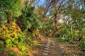 Hiking trail the jungle of Okinawa, Japan.