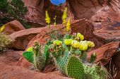 Yellow Cacti under Bow tie Arch