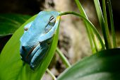 Colorful Blue Frog In Terrarium