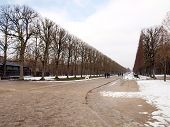 stock photo of winter palace  - avenues of trees planted during the winter in the gardens of the Royal Palace of Versailles near Paris France