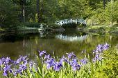 Japonés Zen Garden