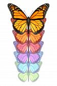 picture of transformation  - Spread your wings and escape with a monarch butterfly flying upward changing and going through a color transformation as a concept of freedom creativity and design innovation isolated on a white background - JPG