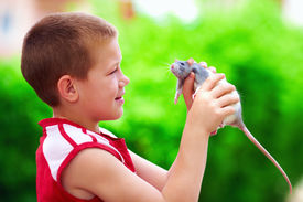 stock photo of curio  - teenage boy playing with rat pet - JPG