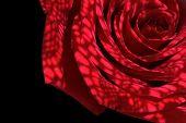 Derived Rose Shadows