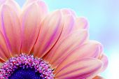 stock photo of sunny season  - Flower close - JPG