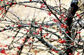 Red berries in winter time