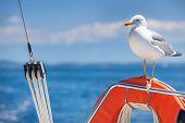 Seagull standing on orange lifebelt against blue sky.