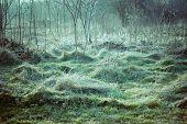 flattened green grass winter morning