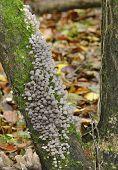 Faries Bonnets Fungi