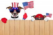stock photo of sneak  - two dogs watching 4th of july parade - JPG