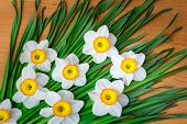 Large Blossoming Narcissuses On A Table.