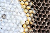 image of maggot  - the Wasps nest on nature on thailand - JPG