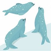 Fur Seal Wildlife Illustration Set