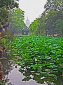 Garden In Suzhou Near Shanghai, China,  Oil Paint Stylization