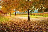 Collection of Beautiful Golden Autumn landscape