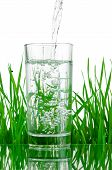 Pouring Water Into Glass On Background Of Green Grass Isolated