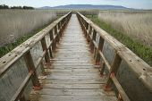 Footbridge Walkway. Wetland Landscape. Tablas De Daimiel. Ciudad Real. Spain.