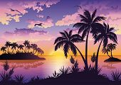 Tropical islands, palms, sky and birds