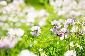 stock photo of heartwarming  - pink wildflowers on the blurred natural background - JPG