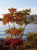 Colorfule Riverside Tree